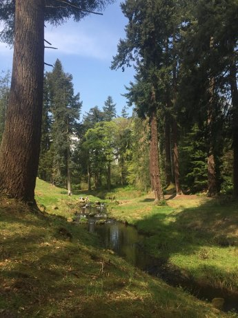 Cragside Woodland